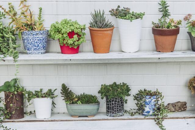 自分にあった植木鉢の処分方法を見つけよう!