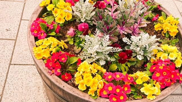 【植木鉢の処分方法】正しい植木鉢の処分方法を知っておこう!