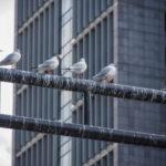 【鳥のフンの対処法】鳥のフン被害にあったときはどうする?知れば安心の対処法もご紹介!