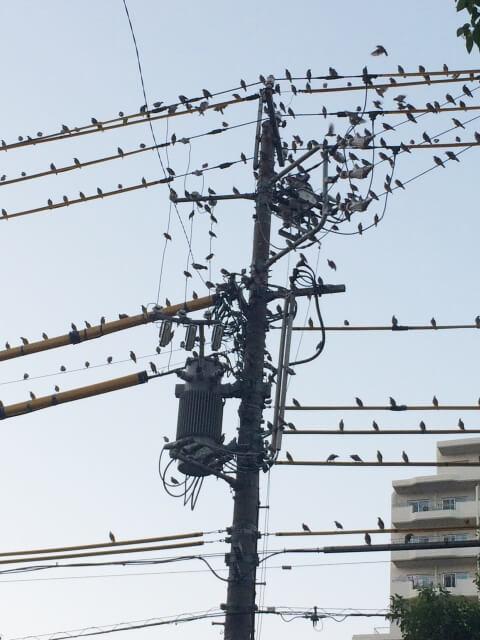 【鳥のフンの対処法】鳥のフン被害に遭遇したときの対処法
