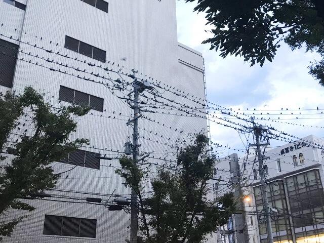 【鳥のフンの対処法】鳥のフン被害の予防方法