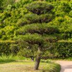 庭木を伐採したい!自分でor業者に依頼、どっちが得?