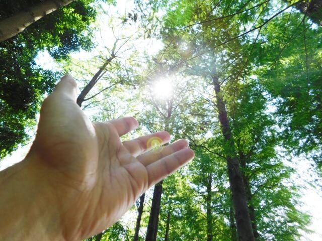 自然を用いた再生可能エネルギーとバイオマス発電の違い